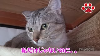 Download mat dropped down on the floor【Cat's room.Miaou】 Video