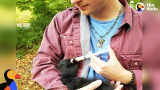 Download Squirrel Still Visits Man Who Rescued Him As a Lost Baby | The Dodo Video