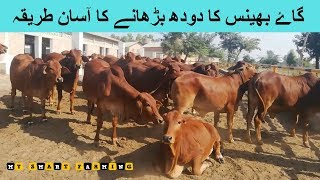 Download 112 | COW AND BUFFALO KA MILK BADHANE KA DESI TAREEQA Video