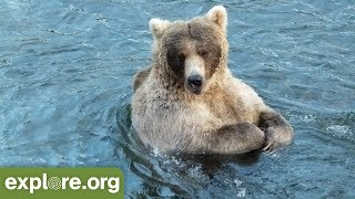 Download Meet 435 Holly - Bears of Brooks Falls Video