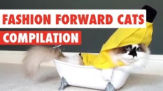 Download Fashion Forward Cats | Funny Pet Kitten Video Compilation 2017 Video