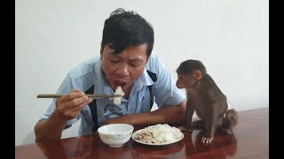 Download Baby Monkey | Doo Also Wants To Eat His Daddy's Extra Meal Video
