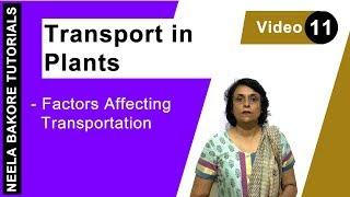 Download Transport in Plants - Factors Affecting Transpiration Video