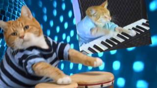 Download Keyboard Cat Bongos! Video