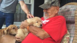 Download Surprising my Dad with a Golden Retriever Puppy Video
