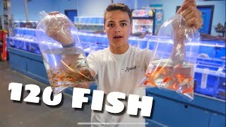 Download BUYING more COLORFUL FISH!!! Video