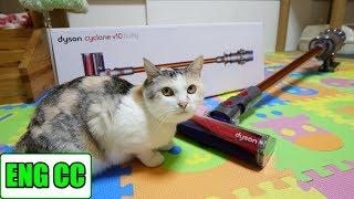 Download ダイソンV10で猫部屋を掃除したら想像を超える驚愕の結果に‥【Eng CC】 Video