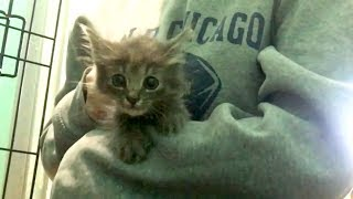 Download NEW Fluffy Feral Kittens Intake & Set Up Video