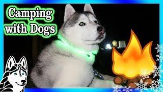 Download HUSKIES GO CAMPING | Camping 2017 | Dog Vlog Video