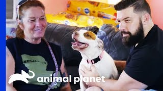 Download Man Finds The Perfect Companion To Share His Life With | Pit Bulls & Parolees Video