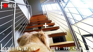 Download What do dogs do when they're home alone? *GOPRO SPYCAM FOOTAGE* Video