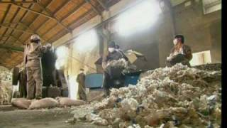 Download How Plastic Bottles Are Recycled Into Polyester Video