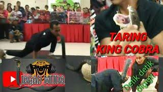 Download DIGIGIT KING COBRA SAAT ATRAKSI (menit 09.22) Video