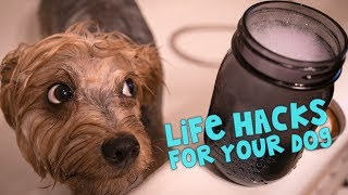 Download 11 Awesome Life Hacks For Your Dog Video