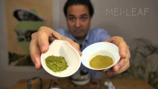Download Everything you need to know about Matcha Video