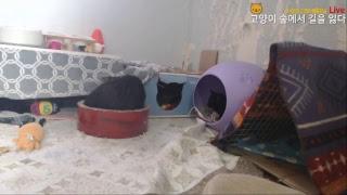 Download 고양이 숲에서 길을 잃다 *Live - 24시간 라이브 고양이 관찰방송 (Cat's forest Video
