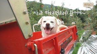 Download 사과밭에서 생긴 일│과수원집 막내딸 인절미 Video