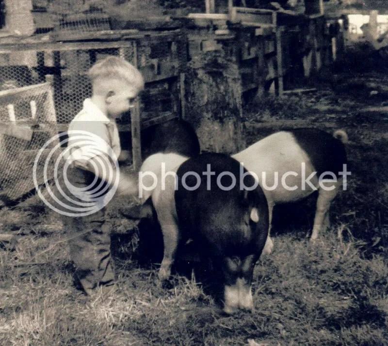 Bennie & The 3 Little Pigs