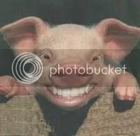pig.jpg pig image by ga-mike