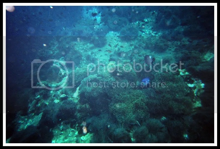 Thailand, Koh Tao, Diving