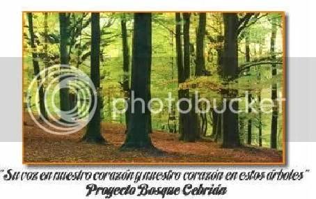 el bosque de cebrian