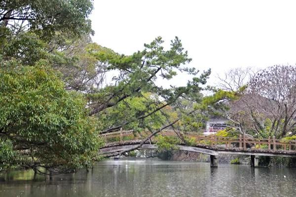 Yanagawa photo DSC_0871-140320-v2__zpse7436c1f.jpg