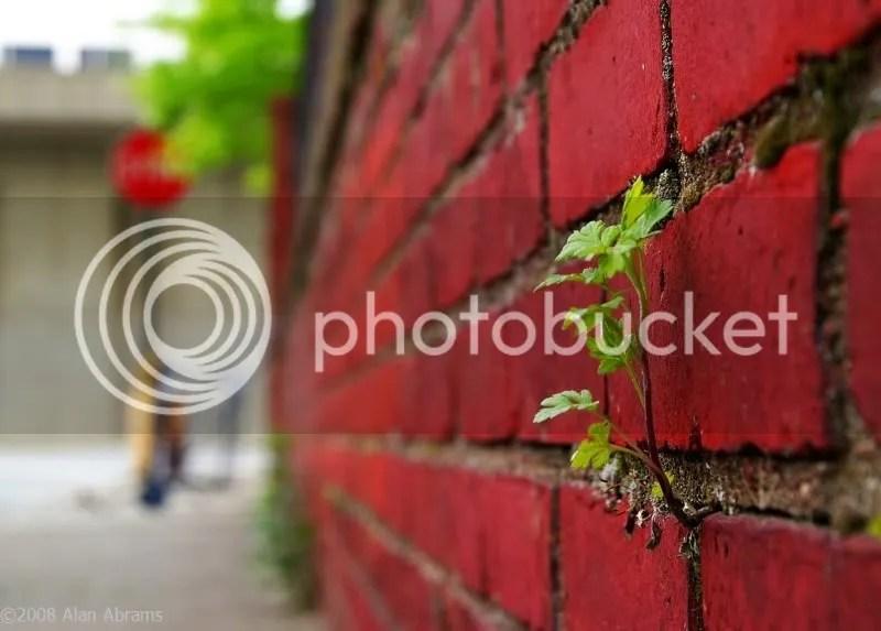 RedBrick and plant