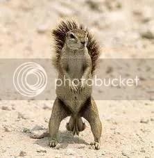 squirrel's nuts