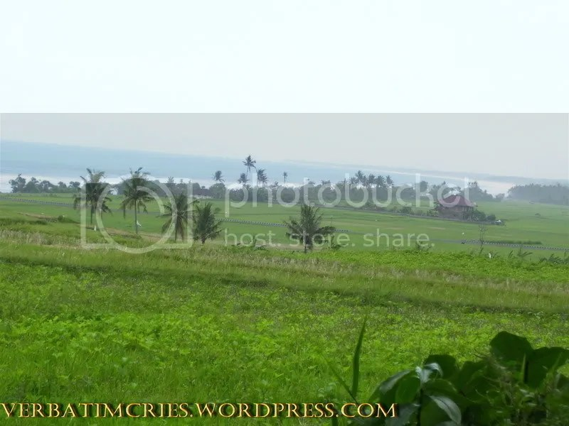 Lush green paddy fields