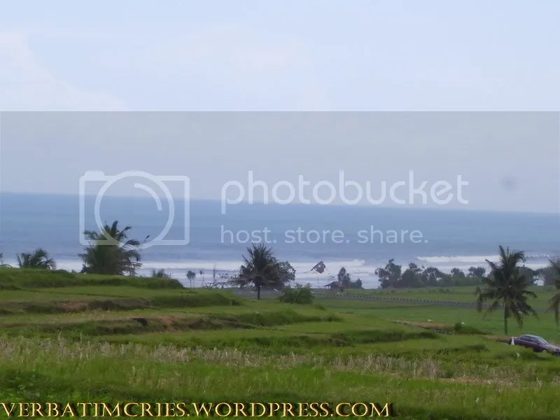 Lush Green Paddy Fields and the Sea