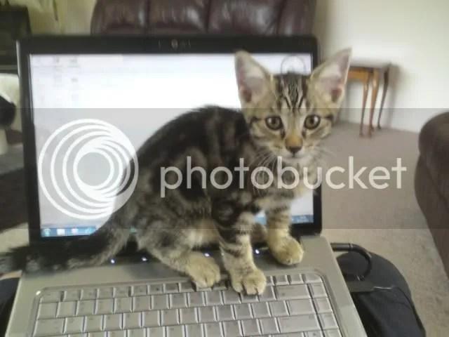 Ollie 01-2011