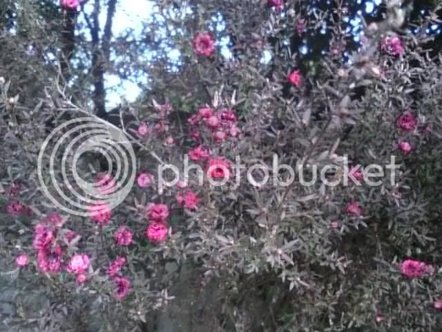 Spring (4/4)