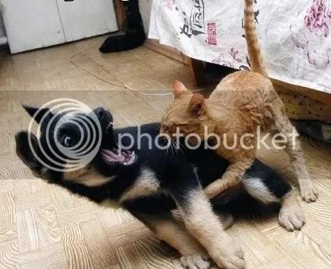 dog vs cat 2