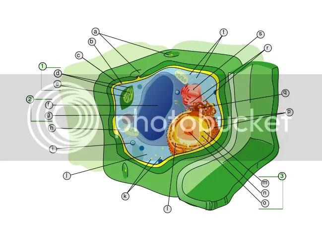 struktur sel tumb - dari en wiki