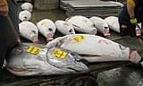 Tsukiji Tokyo Fish market