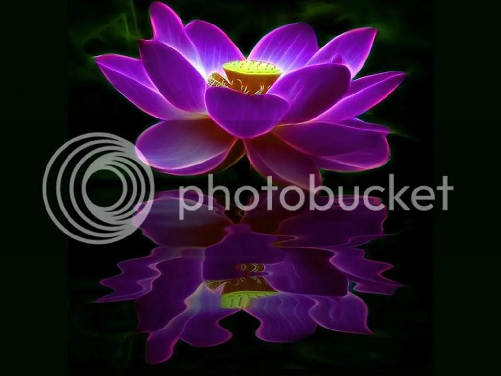 photo Lotus Reflection_zps4mvtjnfz.jpg