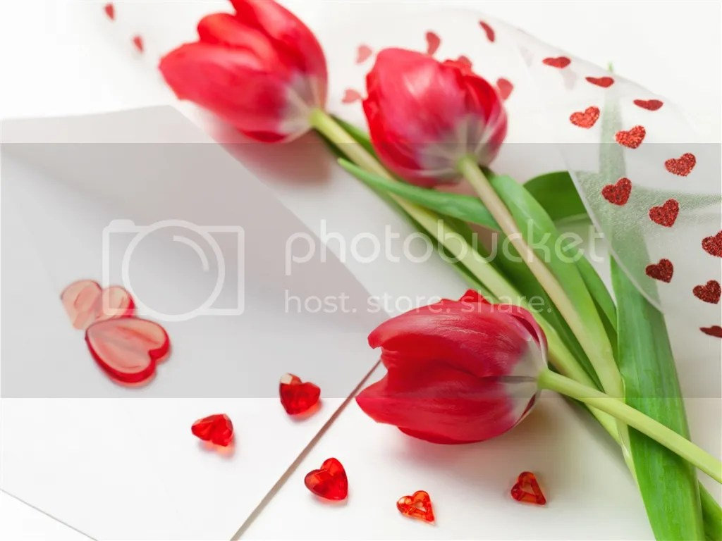 photo Tulips_zps083ca639.jpeg