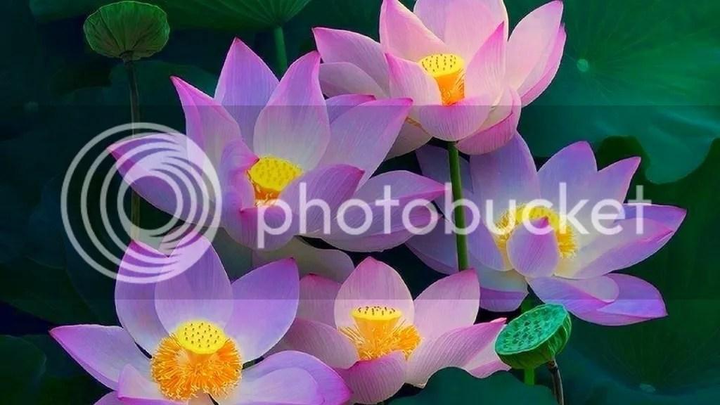 photo Lotus_zpsegnz6asf.jpg