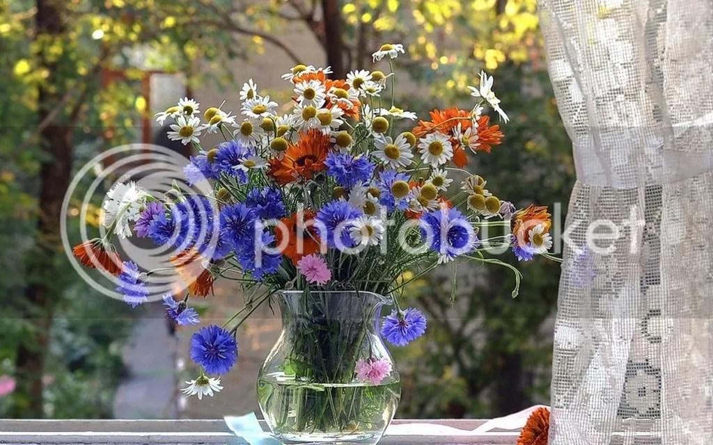 photo Vase 3_zpsksch1zq8.jpg