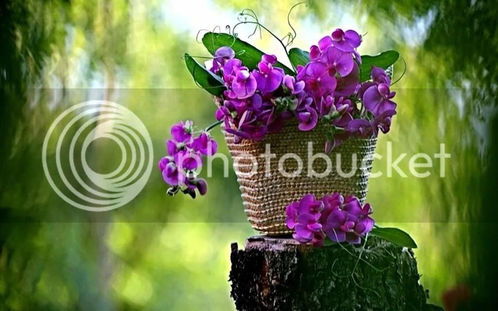 photo Vase1_zpsfnxfgxxb.jpg