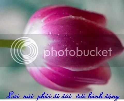 photo hoa2_zps55b7fd7a.jpg