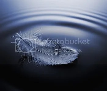 Angel Feather Pictures, Images and Photos