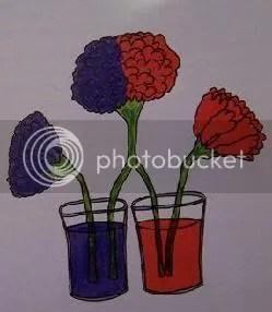experimentos con plantas