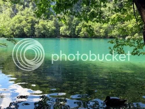 photo IMG_1082_zps5c50b933.jpg