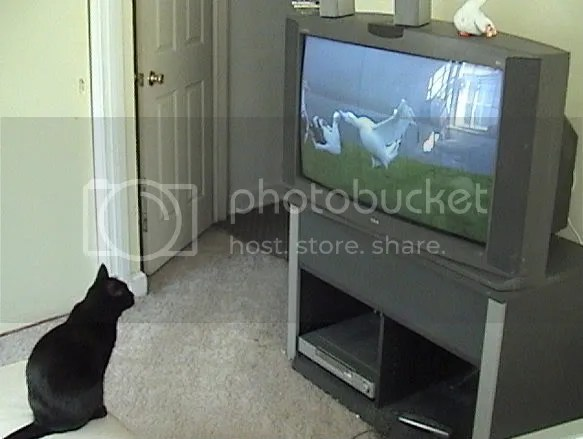 TVforcats.jpg picture by Viviobluerex