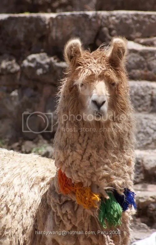 https://i2.wp.com/i22.photobucket.com/albums/b335/hardywang/Peru/Chinchero/DSC02142.jpg