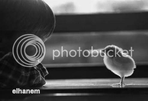 o2Y599521.jpg picture by elhanem