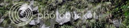 un perete de cascada