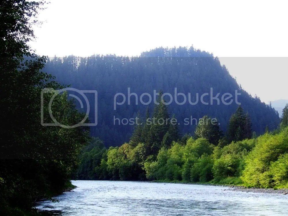 Beautiful Oregon forest and river.