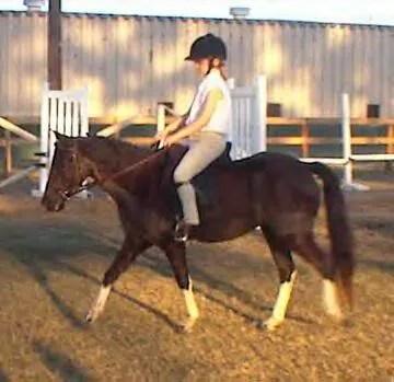 Vixen & Sierra - Nov/Dec 2001 - LP Painted Ponys, Parkton, NC